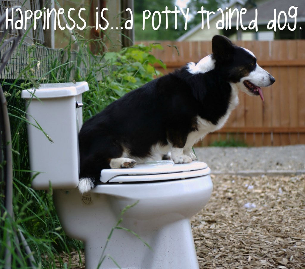 Cardigan Welsh Corgi Potty Training