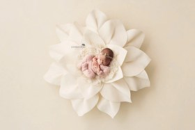newborn felt flower photo