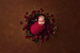 newborn red roses