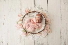 newborn rustic blush roses