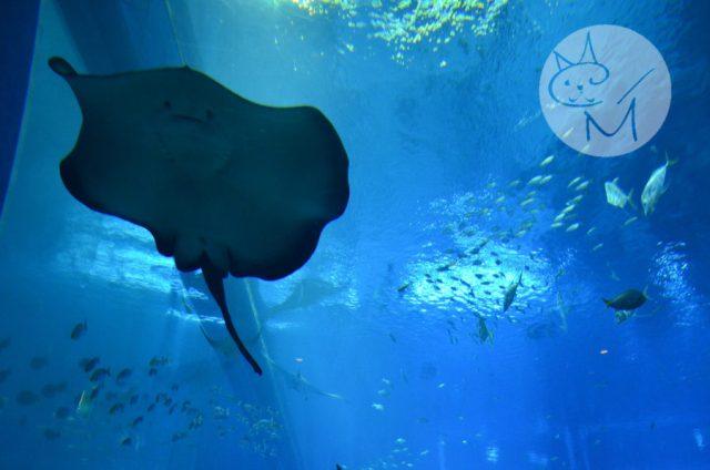 SEA Aquarium din Sentosa, ex-cel mai mare acvariu din lume