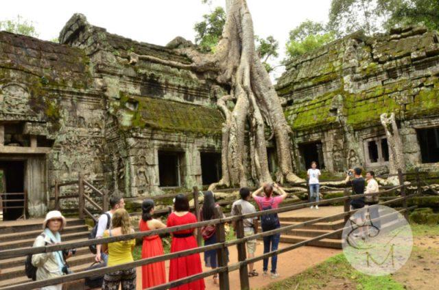 Ta Phrom, ținutul copacilor magici