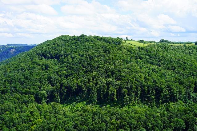 Pădurile virgine din România au intrat în patrimoniul UNESCO