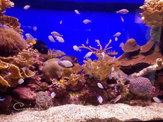 Printre coralii de la Marea Roșie (ep 16)