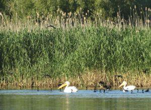Delta Dunării: spectacol cu păsări, stuf și sate pescărești