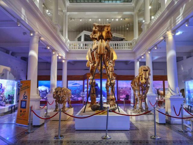 """Muzeim prin București: Muzeul Național de Istorie Naturală """"Grigore Antipa"""""""