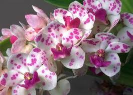 orhidee-24-febroarie4