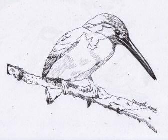 Apr16_drawing_Ijsvogel