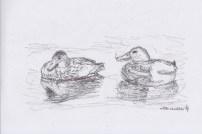 Apr16_pen drawing_wilde eenden