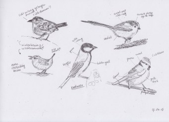 Apr17_drawing_several birds