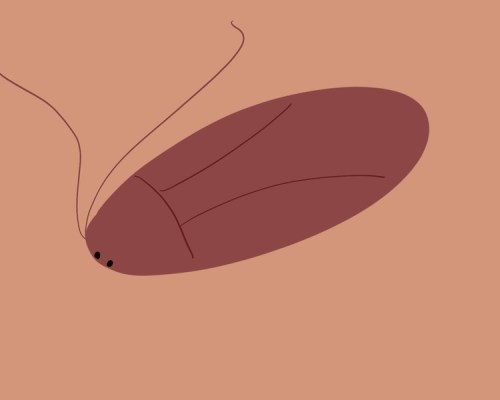 Living With Cockroaches