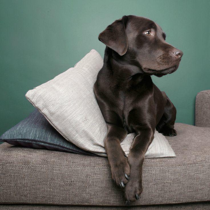 Das Beste Is Apartment Living Appropriate For Your Dog Dog In Diesem Monat