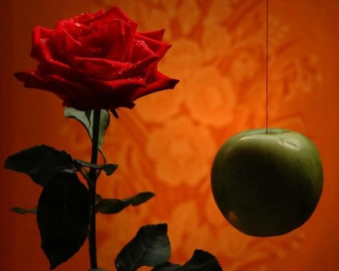 Mit tud a kert? - verseskötet- bemutató