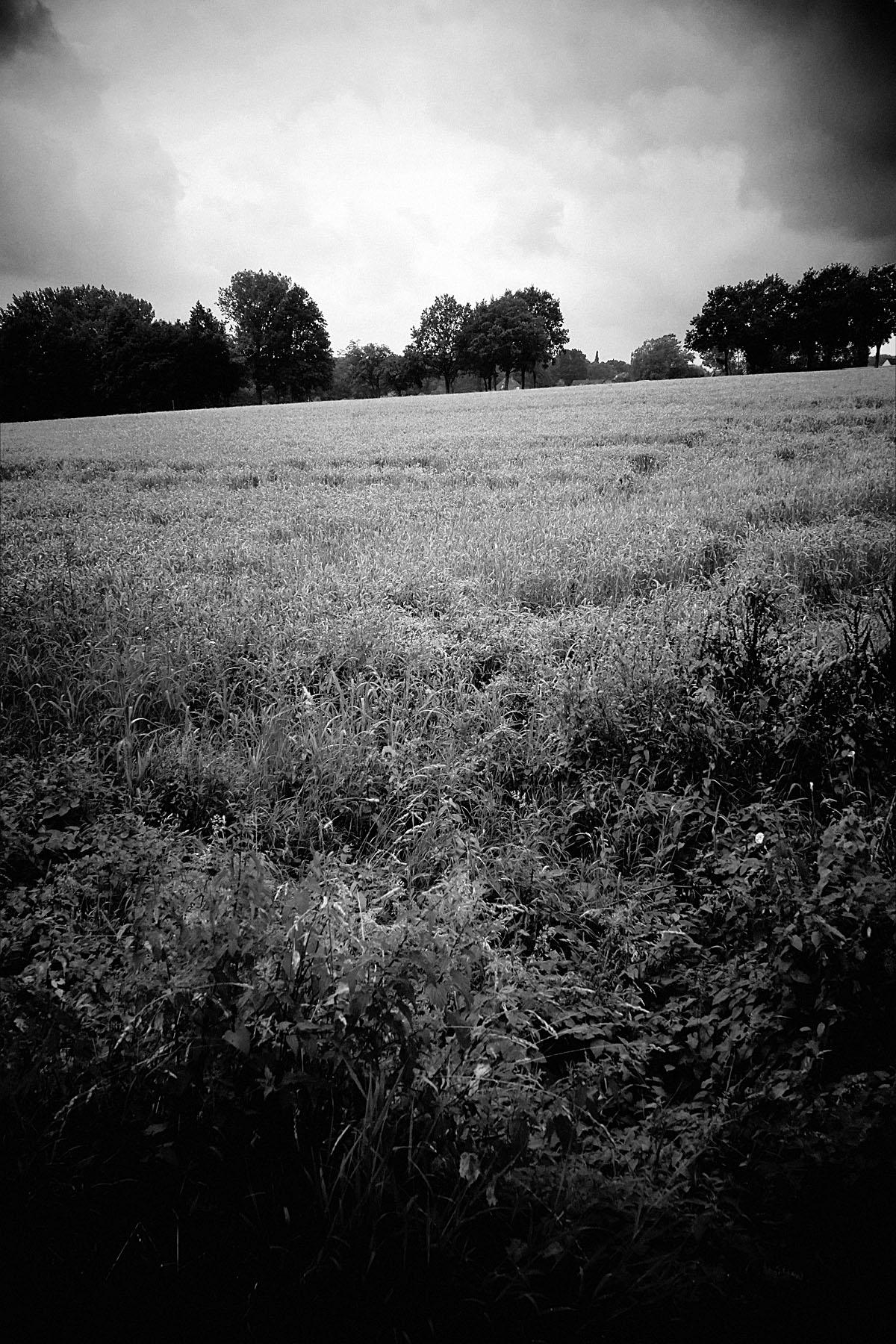 Feld im Juli I