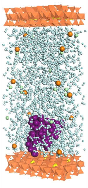 Clay mineral capture of microcystin: water molecules (light blue), microcystin (dark purple), calcium (orange), chloride (light green), clay layer (orange), negative charges in clay structure (yellow).