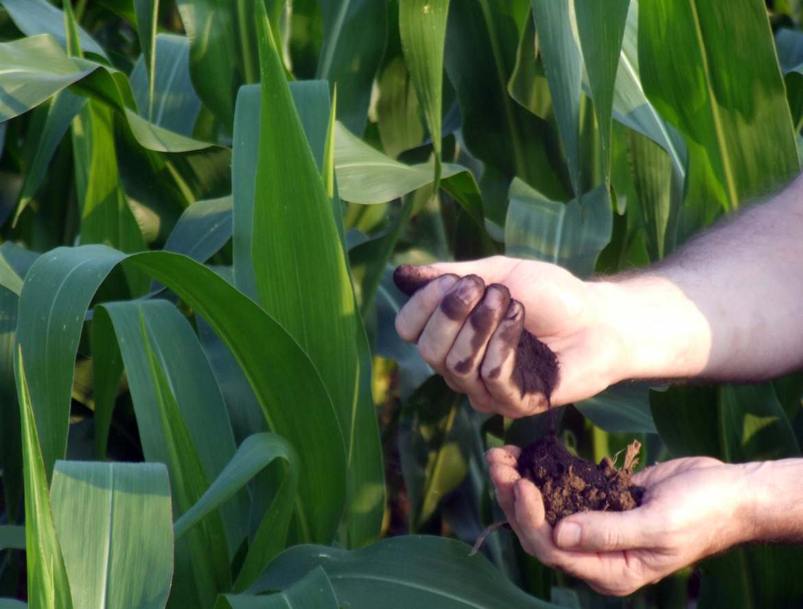 Biochar is made from maize residues