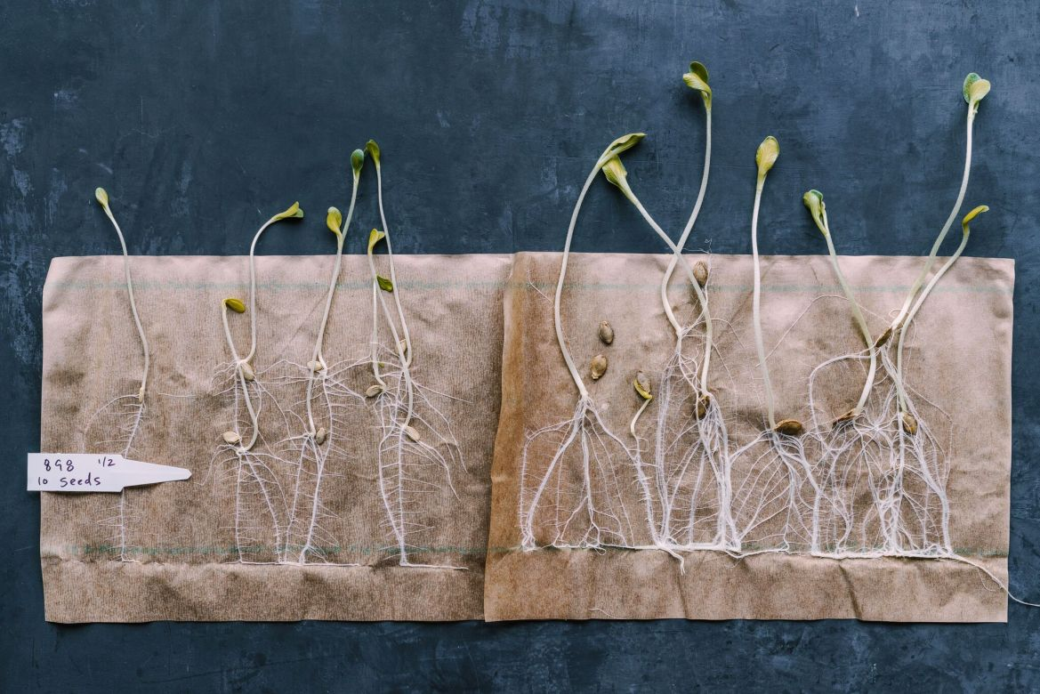 Row 7 Seed Company, recently launched in part by Prof. Michael Mazourek, Ph.D. '08, has developed unconventional seeds like those for the flavorful 898 Squash plants pictured above.