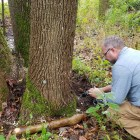 Despite treatment for a few hundred of Cornell's trees, many thousands more are expected to die from the invasive beetle.