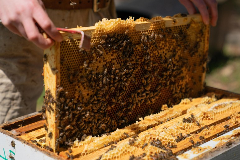 The Dyce Lab for Honey Bee Studies is home to nearly 100 colonies, which contribute to research and extension programs spanning New York State. (Ben Parker / Sun Assistant Photography Editor)