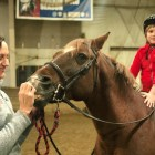 "Cornell's equestrian team ""adopted"" an eight-year-old battling leukemia."