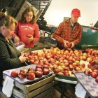 The Cornell Orchards Store, which has sold Cornell-grown apples for the past 68 years, announced it is closing its doors.