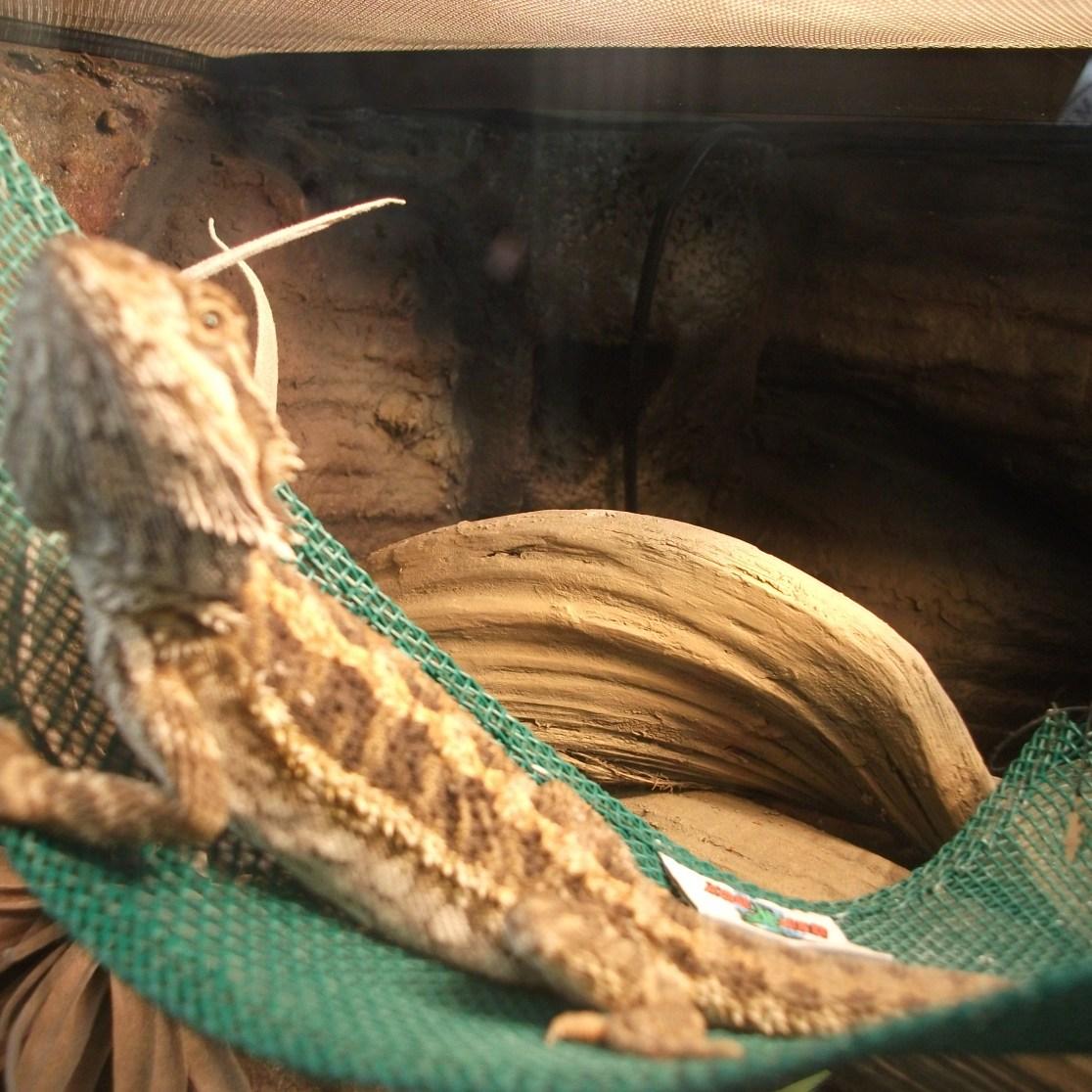 dragon 002
