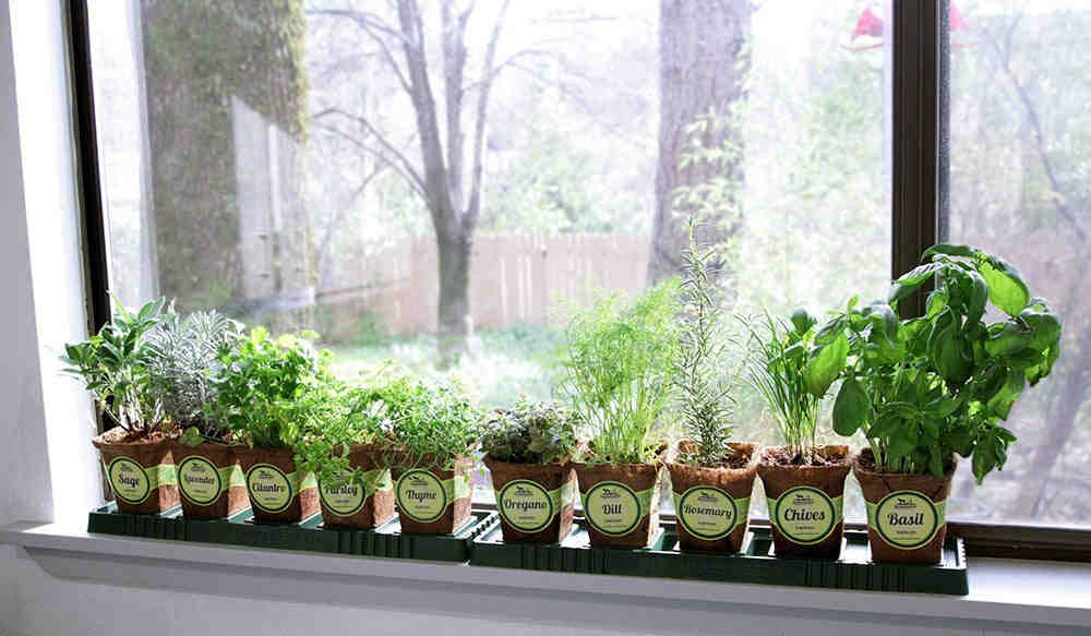 Indoor Herb Garden For Beginners Corner Of My Home