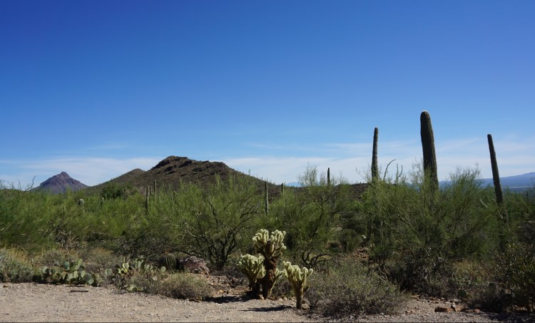 Cornish Arizona