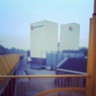 Instagram_cornutus_20121114 (6)