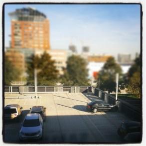 Instagram_cornutus_20121114 (8)