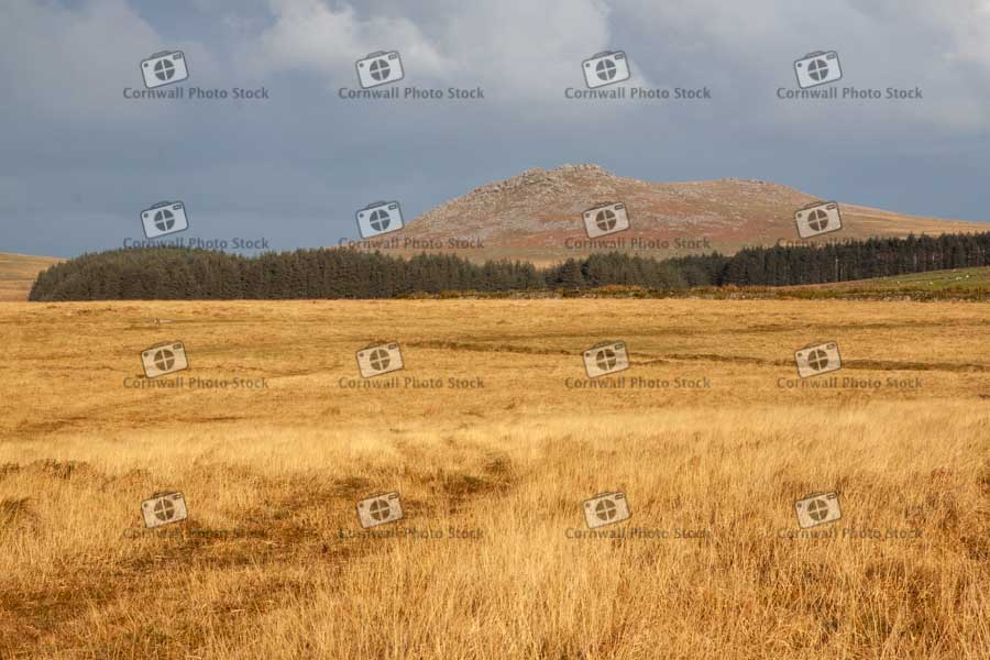 Roughtor With Golden Field Foreground