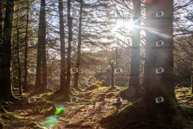 Sunlight through the trees on Bodmin moor