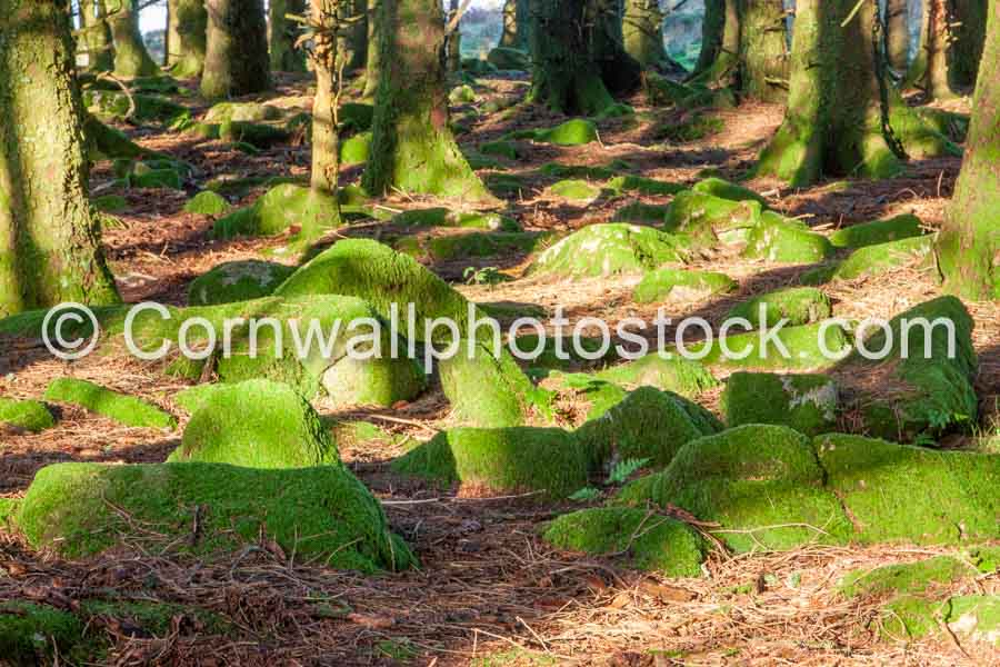 Mossy Boulders On Forest Floor