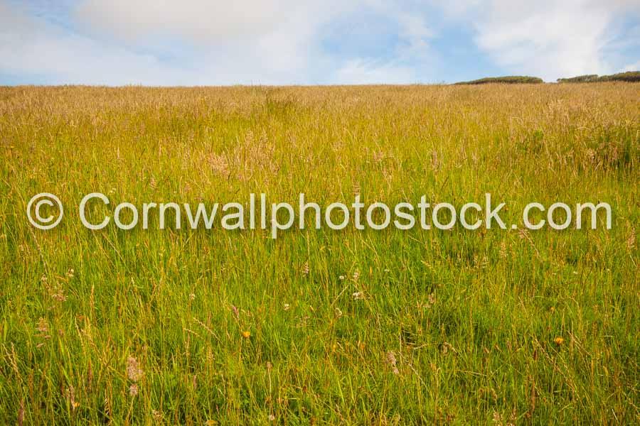 Field of Wild Grass