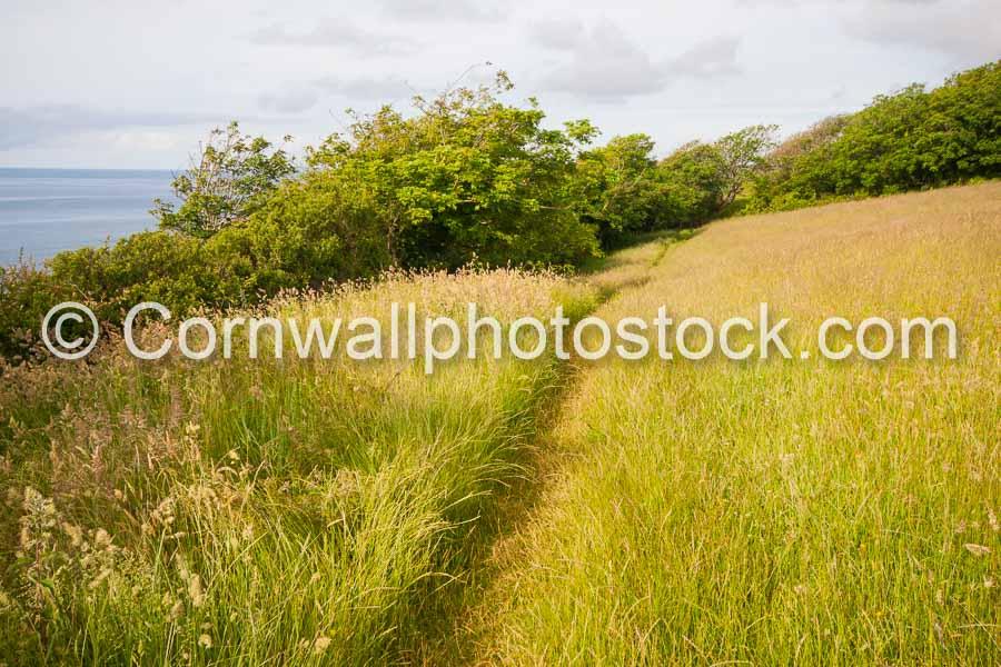 Path Through Field of Wild Grass