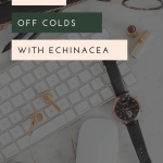 Keep healthy by using Echinacea as a remedy for colds