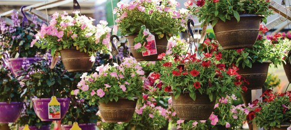 The Home Depot   How Garden Centers Vary Region to Region