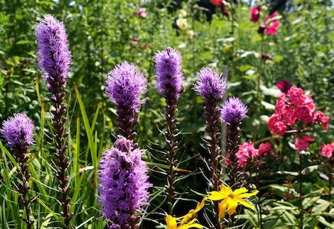 Naturopathie guérir manière naturelle médecine douce