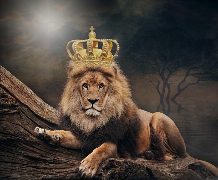 Lion avec une couronne