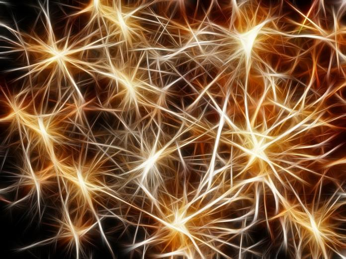 Connections neuronales