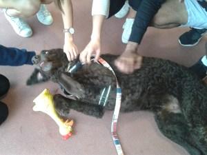 SPCA Dog Squad at the University