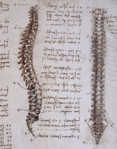 Drawings of the spine. Leonardo da Vinci