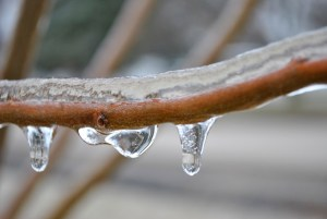 ice on tree branch