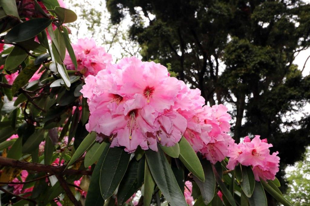 2017_10_15 Botanical Gardens 04