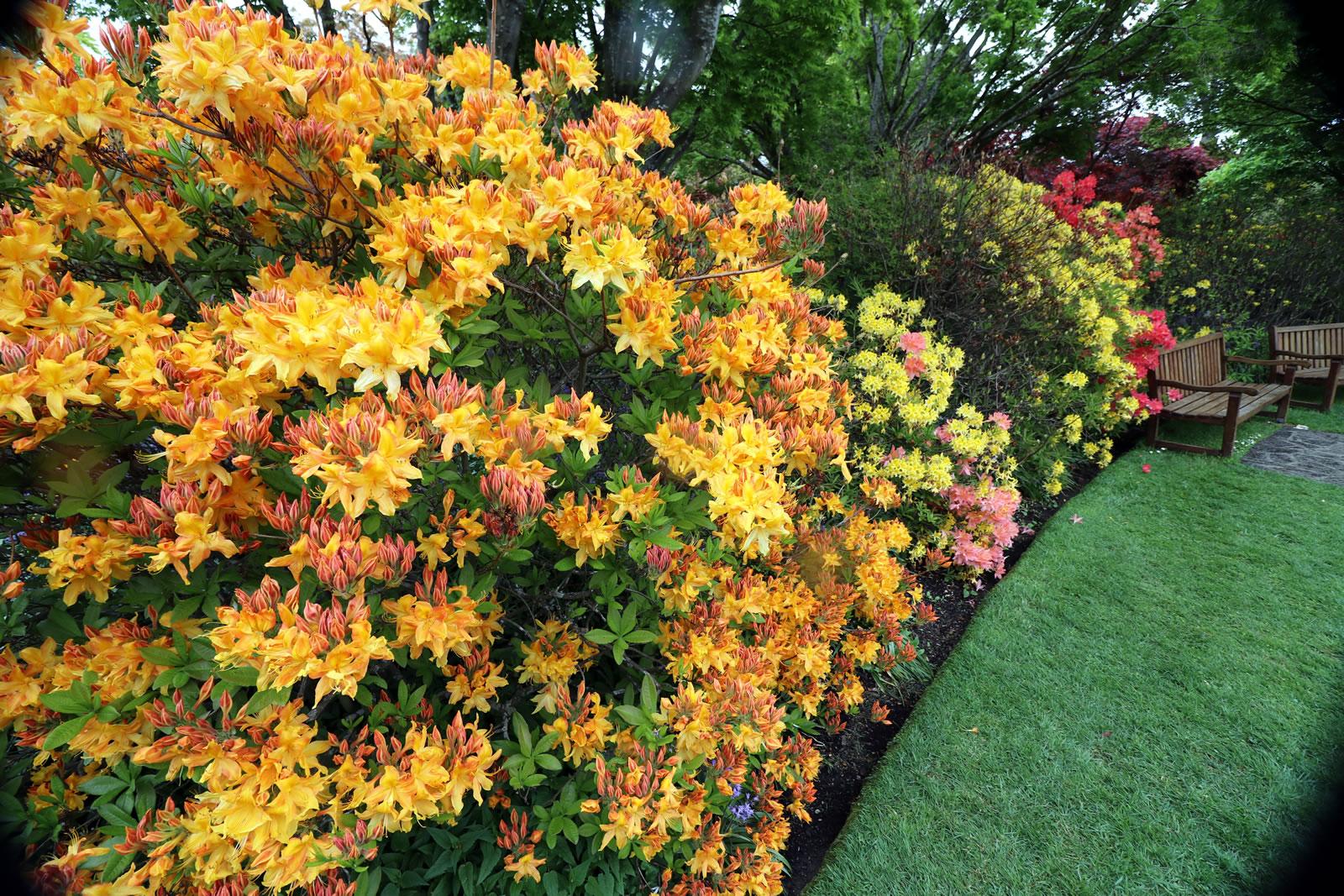 2017_10_15 Botanical Gardens 07
