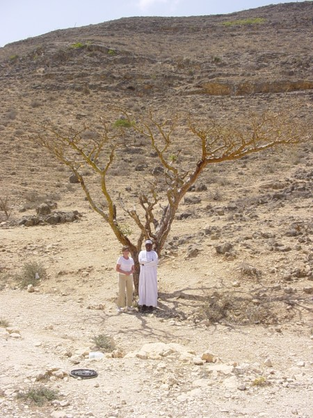 Sandra Arnold, Abdullah and frankincense tree