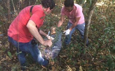 Polícia encontra ossada humana na MGC-354