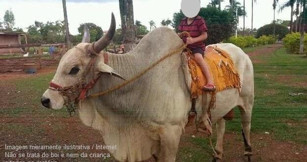 Criança de 2 anos é pisada por boi durante desfile de animais, em Morrinhos