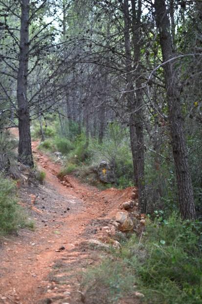 trail recorrido-10