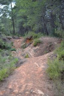 trail recorrido-9